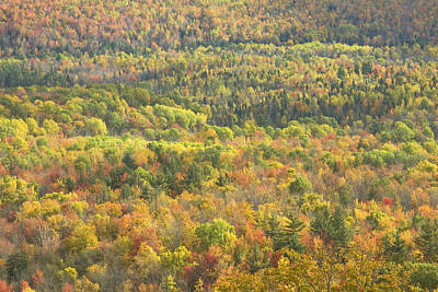 Photograph - Weld Maine Fall Forest In Mount Blue State Park by Keith Webber Jr