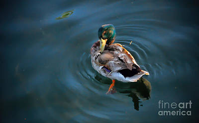 Photograph - Well-groomed Duck by Elizabeth Winter