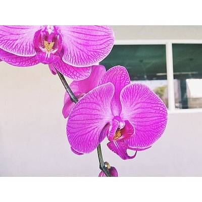 Orchids Photograph - Well Hello Gorgeous. Still In Love With by Christi Mcgarry