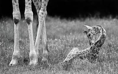 Cub Photograph - Well Protected II by Andreas Feldtkeller