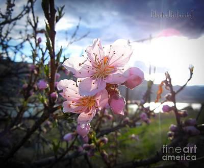 Photograph - Wenatchee Apples by Jamie Johnson