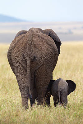 Baby Elephant Wall Art - Photograph - We're Gone by Alejandro Metzger