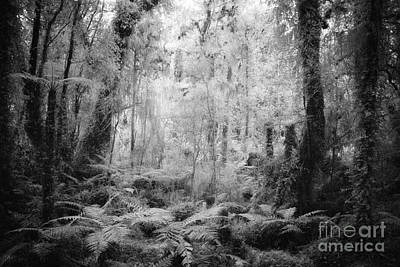 Photograph - West Coast Forest by Colin and Linda McKie