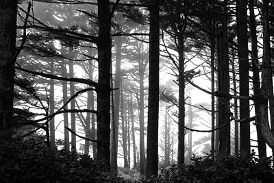 West Coast Trees Art Print