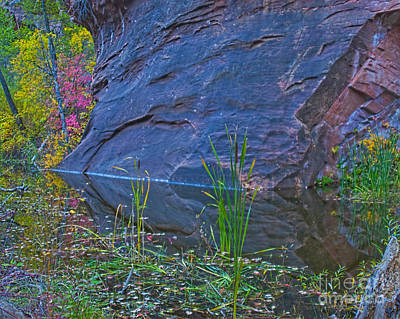 Sedona Photograph - West Fork Cattails by Brian Lambert