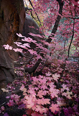 Photograph - West Fork Fall Colors by Dave Dilli