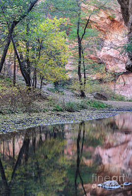 Photograph - West Fork Reflection by Tamara Becker