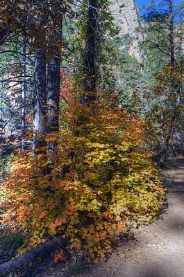 West Fork Fall Color Art Print