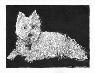 Scottish Dog Drawing - West Highland White Terrier by Jack Pumphrey
