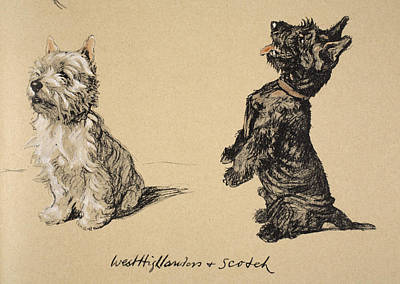 Dogs Drawing - West Highlander And Scotch, 1930 by Cecil Charles Windsor Aldin