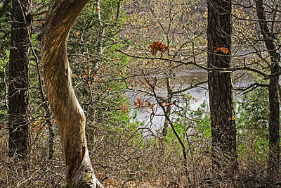 West Pond In The Woods Art Print by Frank Winters