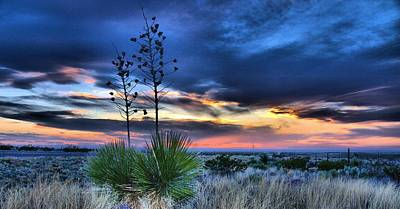 West Texas Yuccas Art Print
