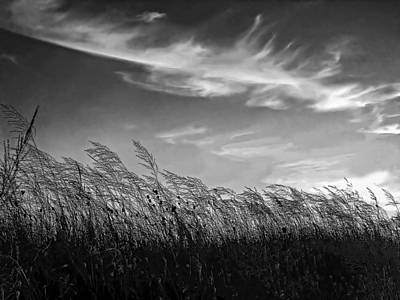 Sauble Beach Photograph - West Wind Bw by Steve Harrington
