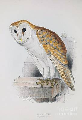Painting - Western Barn Owl by Pg Reproductions