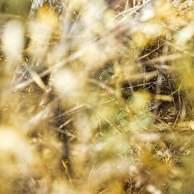 Photograph - Western Collared Lizard Hidden In Plain Sight   by Chris Bordeleau
