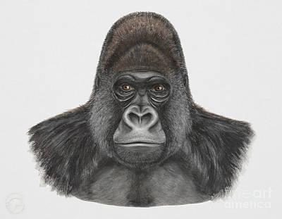 Chimpanzee Painting - Western Gorilla - Gorilla Gorilla - Gorille De L'ouest - Gorila Occidental - Ocidente - Occidentale  by Urft Valley Art