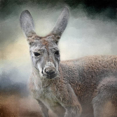 Marsupial Photograph - Western Grey Kangaroo - Wildlife by Jai Johnson