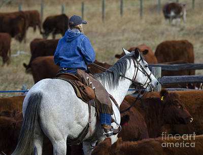 Cattle Drive Photograph - Western Living 3 by Bob Christopher