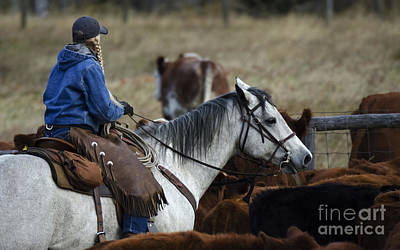 Cattle Drive Photograph - Western Living 4 by Bob Christopher