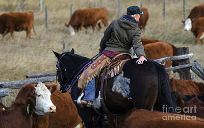 Cattle Drive Photograph - Western Living 8 by Bob Christopher