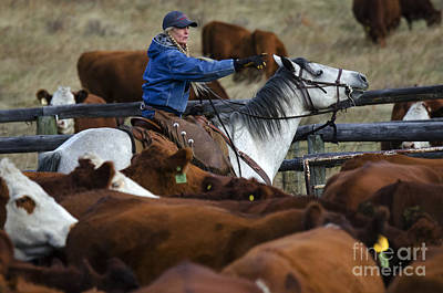 Cattle Drive Photograph - Western Living 9 by Bob Christopher