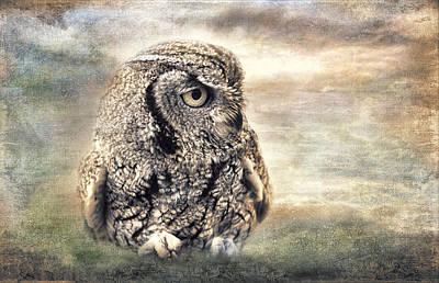 Screech Owl Photograph - Western Screech Owl by Barbara Manis