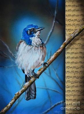 Western Scrub Jay Art Print