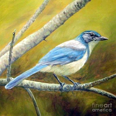 Scrub Jay Painting - Western Scrub Jay by Tom Chapman