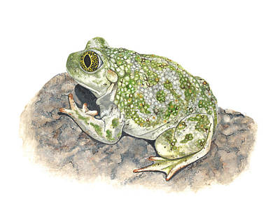 Painting - Western Spadefoot by Cindy Hitchcock
