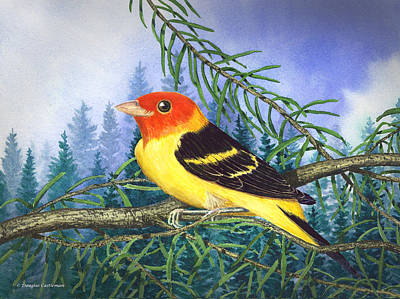 Western Tanager In Yosemite Art Print