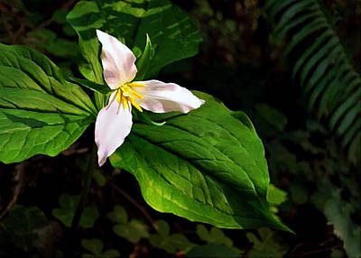 Painting - Wake Robin Or Trillium by  Nadine Johnston