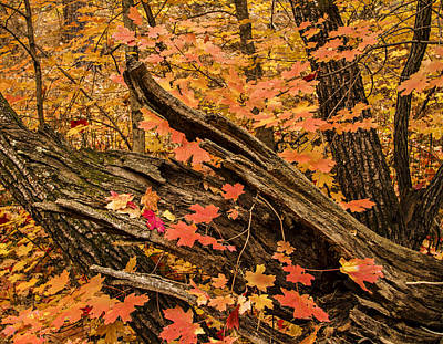 Westfork Foilage Art Print by Tom Kelly