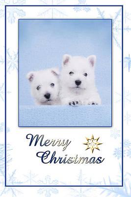 Maltese Dog Christmas Cards Wall Art - Photograph - Westie Christmas Card by Waldek Dabrowski