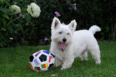 Westie World Cup Art Print