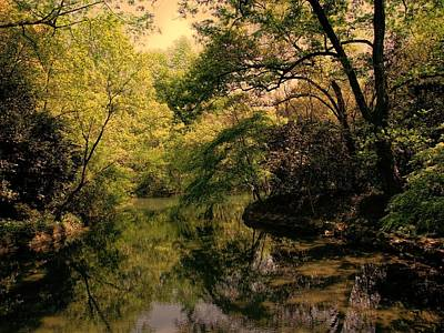 Photograph - Westlake Woods by Robert Knight