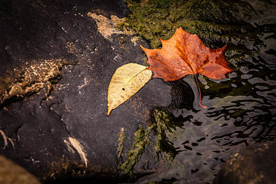 Photograph - Wet Autum by Melinda Ledsome