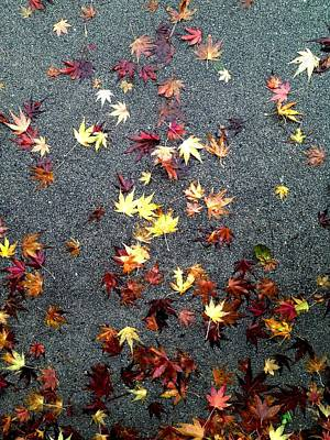 Photograph - Wet Autumn by Lora Lee Chapman