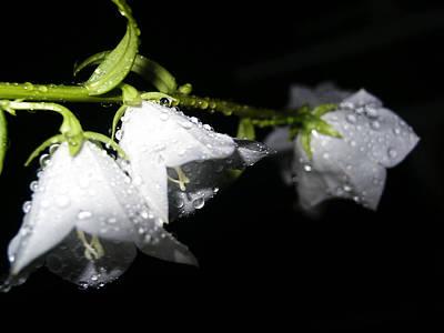 Photograph - Wet Bells by Tarey Potter