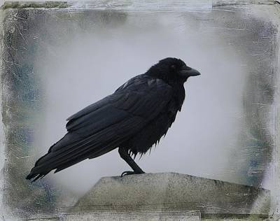 Gothicrow Photograph - Lone Wet Blackbird by Gothicrow Images