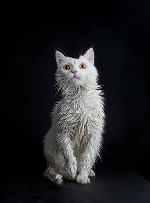 Photograph - Wet Cat Against Black Background by Image Taken By Mayte Torres