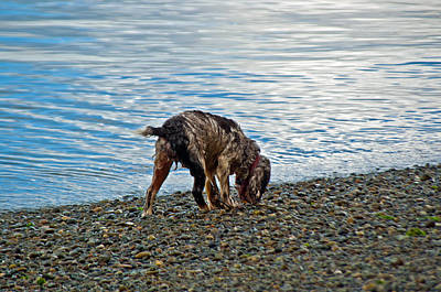 Photograph - Wet Dog On Beach by Tikvah's Hope