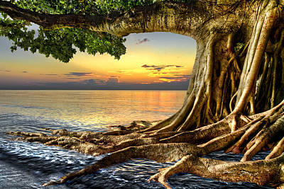 Tree Roots Photograph - Wet Dreams by Debra and Dave Vanderlaan