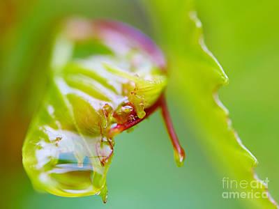 Photograph - Wet Grape Leaf  by Nick  Biemans
