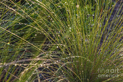 Close Focus Nature Scene Photograph - Wet Grass by Juan  Silva