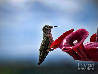 Photograph - Flower Feeding For Hummingbirds by Brenda Kean
