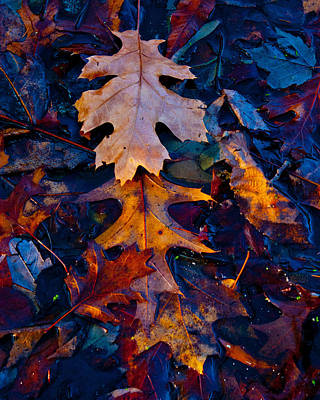 Photograph - Wet Leaf Layers by David Frankel