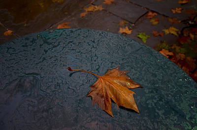 Wet Leaf Art Print by Mike Horvath