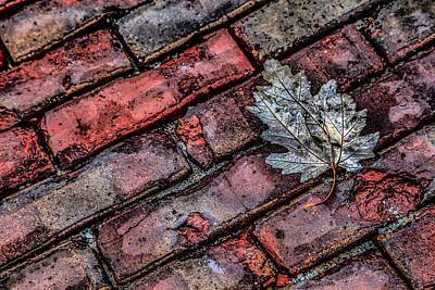 Wet Leaf Road Art Print