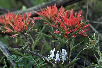Photograph - Wet Paintbrush by Eric Rundle