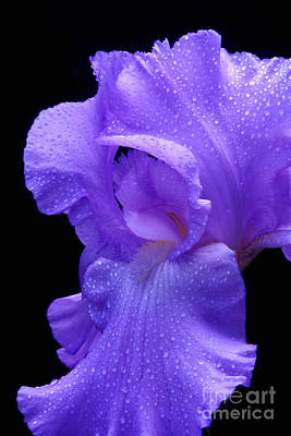 Photograph - Wet Purple by Paul W Faust -  Impressions of Light